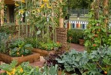 Gardening - Raised Beds / by Joyce Tillery