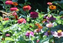Gardening - Flowers / by Joyce Tillery
