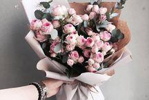 blossoms / blossoms