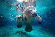 Amazing Animals / by Lindsey K