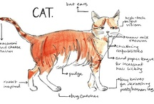 Cats and occasionally dog / by Lynn Van Wyk