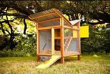 Mini Homestead / Ideas for our backyard garden and mini homestead.  / by Amanda Scacchi
