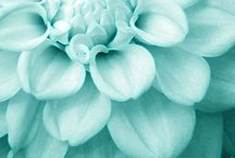 Aqua/turquoise/teal (and some other in between blues...) / by Suzan Horvath