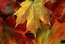 """The colours of Autumn / """"Autumn is a second spring, when every leaf is a flower."""" Albert Camus"""