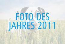 >> Fotos des Jahres 2011