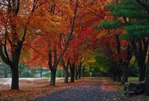 All I Love Autumn