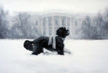 White House / by Alycia Smith