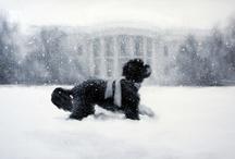 White House / by Alycia Smith
