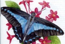 Butterflies Are Welcome / by Cheryl Bloser