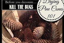 Crafts - Pine Cones