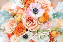farbwelt apricot / Farbinspirationen für Brautpaare zur Hochzeit  zusammengestellt von www.suess-und-salzig.de