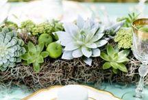 Hochzeitsideen mit Sukkulenten / Hochzeitsideen mit Sukkulenten