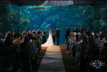 Florida Aquarium Weddings / Weddings at the Florida Aquarium that we have photographed