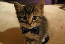 Cuteness! / by Rachael Cole