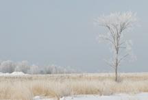 seasonal / by Margaret Lillian