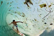 Marine life & plastic