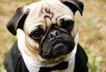 Pet Friendly Wedding Inspirations