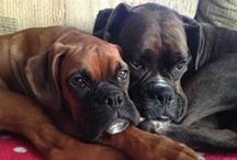 BOXER LOVE 3 / by Jaimie Addesso