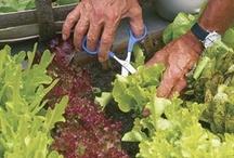 Garden Goodies / Ideas for Gardening