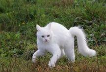 Gatti / Cats / by A. Cucchiero