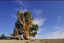 ✿ Wald & Baeume ✿ / Wälder, Baumriesen, bizarre Bäume, ungewöhnliche Formen, schöne Farben, Totholz, Lebensraum Wald, Waldschutz, Regenwald