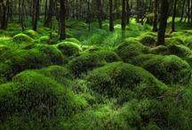 Muschio / Moss / by A. Cucchiero