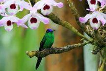 Hummingbirds ღ / by CЯIS NISHIMUЯA
