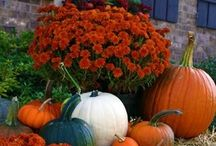 Fall is the most wonderful time of the year!! / by Kimberly Stater