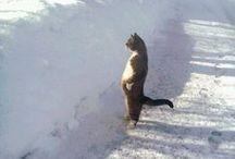 Gatti > Buffi / Whimsical cats / by A. Cucchiero