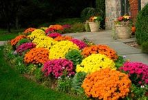 Garden - Landscaping / Landscaping, Lawn, Flowers, Yard Design / by Jessica OKC