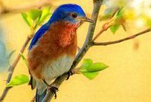 Heaven is Home / God loved the birds and invented trees.  Man loved the birds and invented cages.  ~ Jacques Deval, Afin de vivre bel et bien / by Judy Healey Bakker