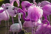 flamingos so pretty / by Ott Smith