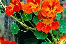 Gorgeous spring & Summer flowers!!!!!!! / Lovely flowers! / by Ott Smith