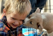 Corgis n' Kids! / by Daily Corgi