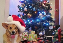 Corgis at Christmas! / by Daily Corgi