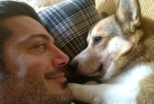 Who's Your Corgi Daddy? / by Daily Corgi