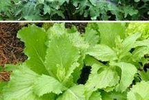 Garden & Growing Tips / Gardening - Growing - vegetables - herbs - plants - flowers