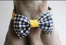 WEIM obojky ♥ homemade dog collars / http://www.sashe.sk/weim