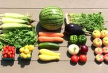 Spring CSA | Community Supported Agriculture / Fifer's 'Delmarva Box' CSA program offers a weekly box of high-quality fruits and veggies. Membership details: www.fiferorchards.com.  Enjoy a share of the harvest!