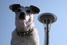 Seattle Dogs / by Jim Hoge