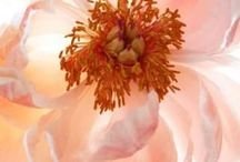 botanical beauties, flowers and floral art