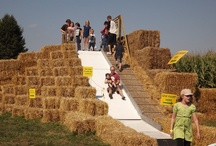 Fall Family Fun / Fun, family-oriented Fall Fest activities at Fifer Orchards.