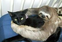 Sloths / by Katelyn Harper