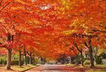 - autumn glow - / by S