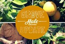 Grove Update / Check on your premium citrus fruit growth all year long. Learn how the Indian River soil provides the perfect food for our trees, while Florida bees enjoy the orange blossoms as much as we do!