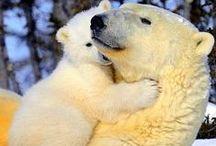 Polar bears & Penguins