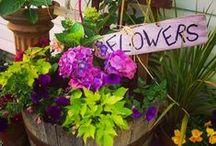 Garden Inspiration / by Heather Marie