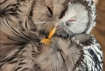 Feathered Friends / by Heather Marie