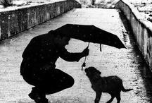 Rain / by Laura Flaherty