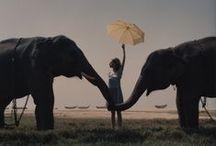 Animals. / by Meegan Hutcheson